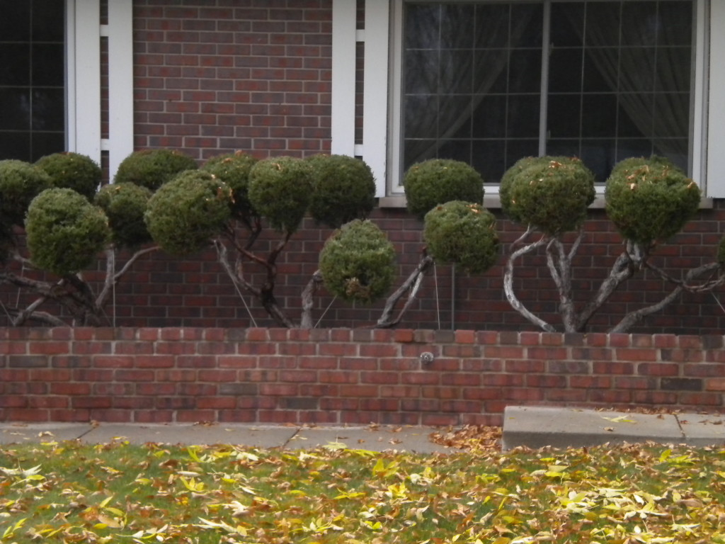 trimmed topiary