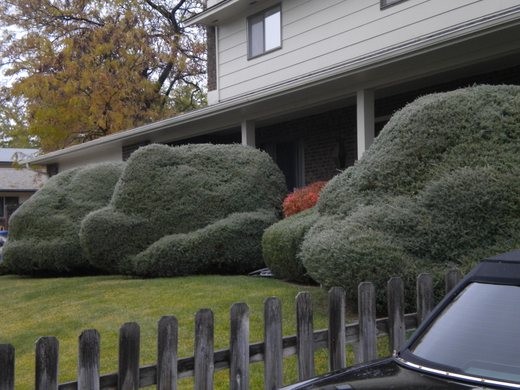 cloud bushes