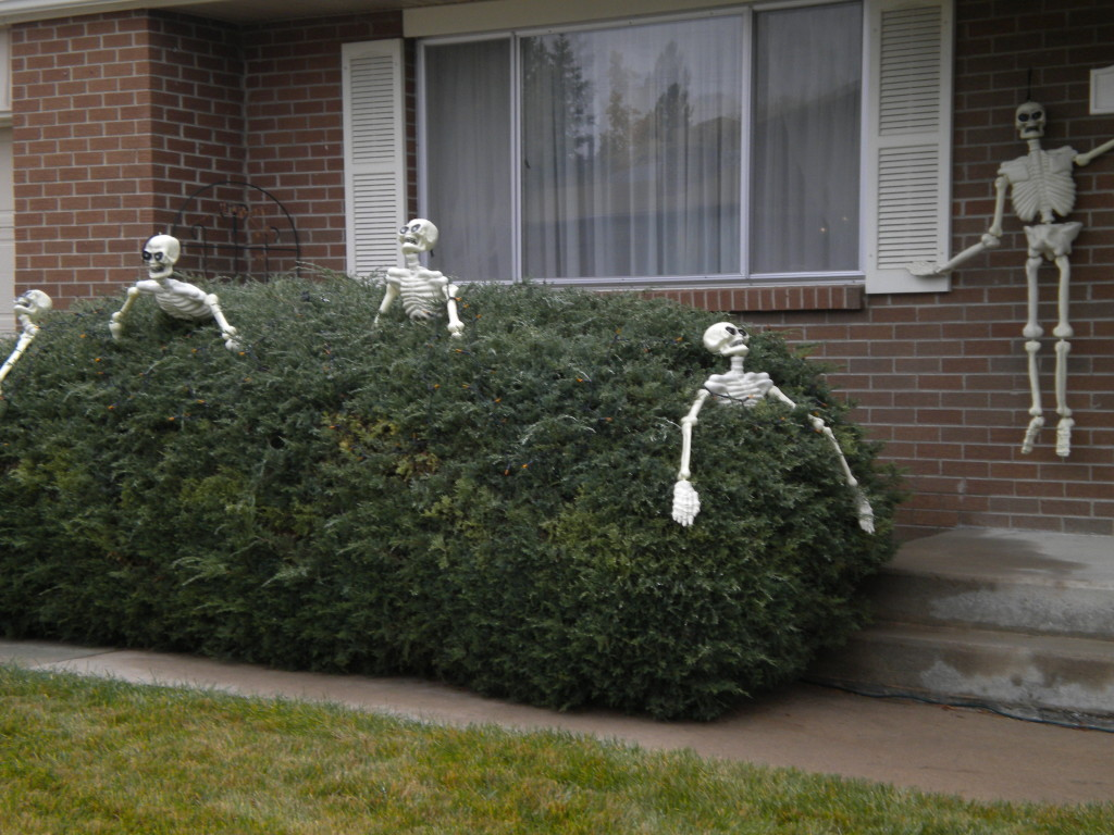 crawling out of the shrubbery