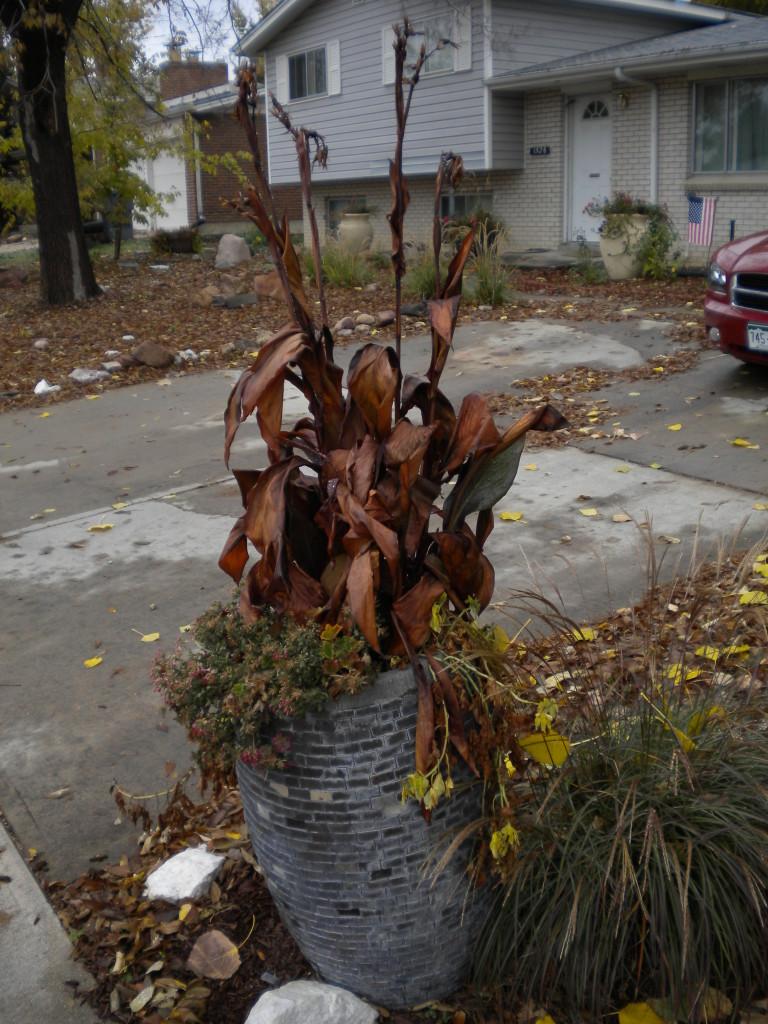 planter vegetation