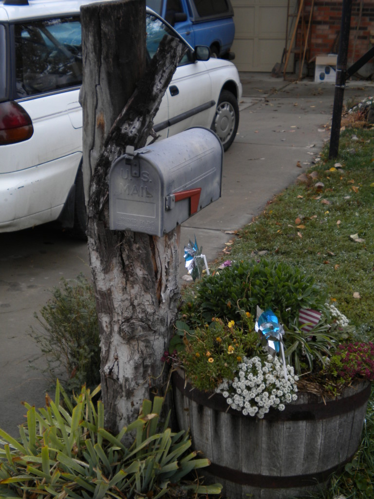 surprising there aren't more mailboxes attached to trees