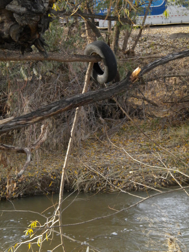 This tire snagged on a tree branch was a good 15 feet above the current level