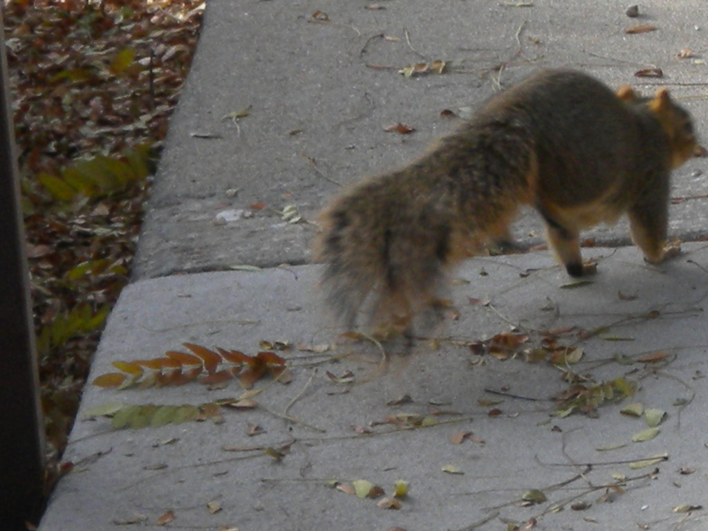 squirrel on front legs