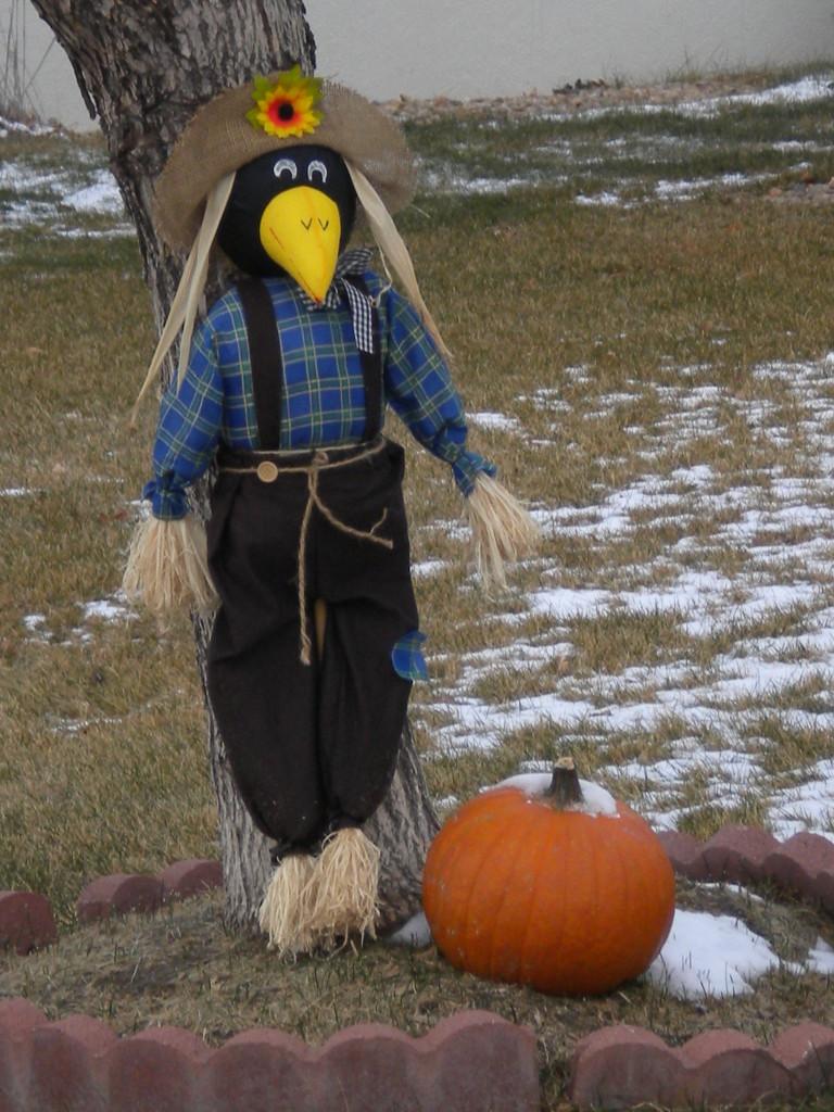 magpie with pumpkin?