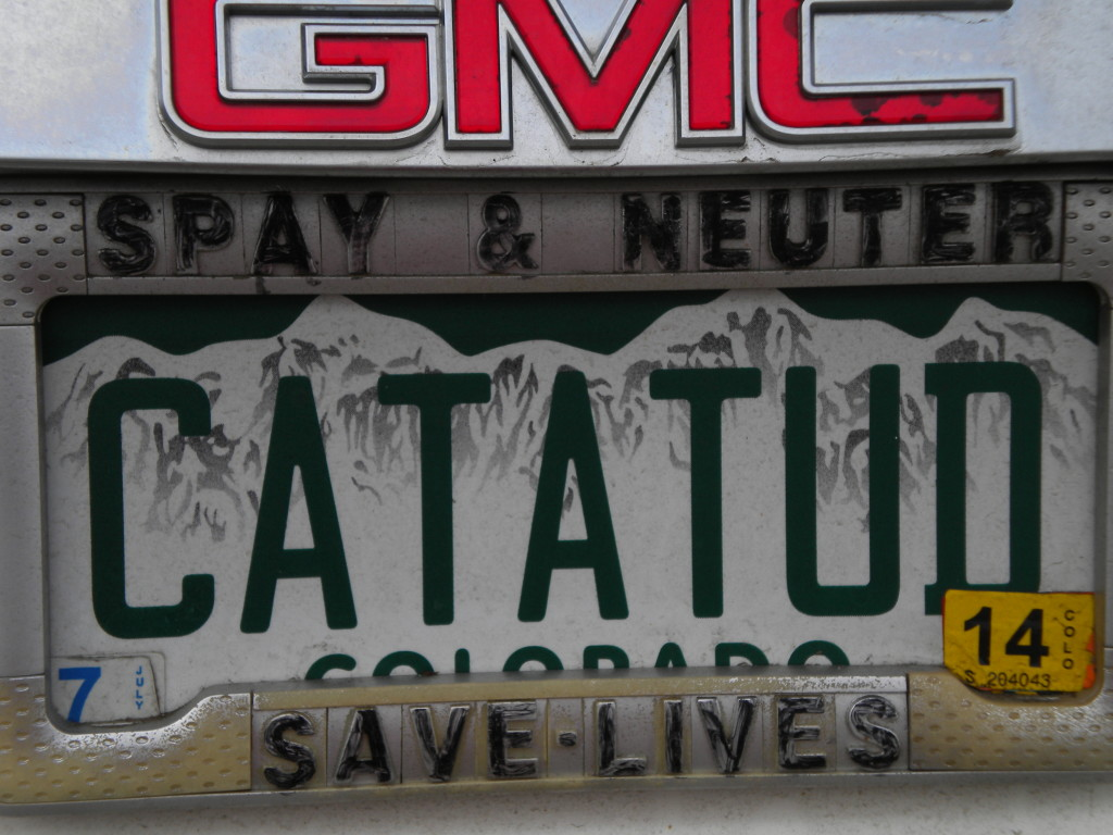Cat lover license plate # 1