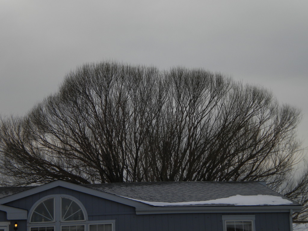 leafless branches across a sunless sky