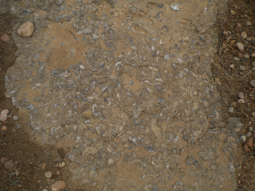 fossils near by