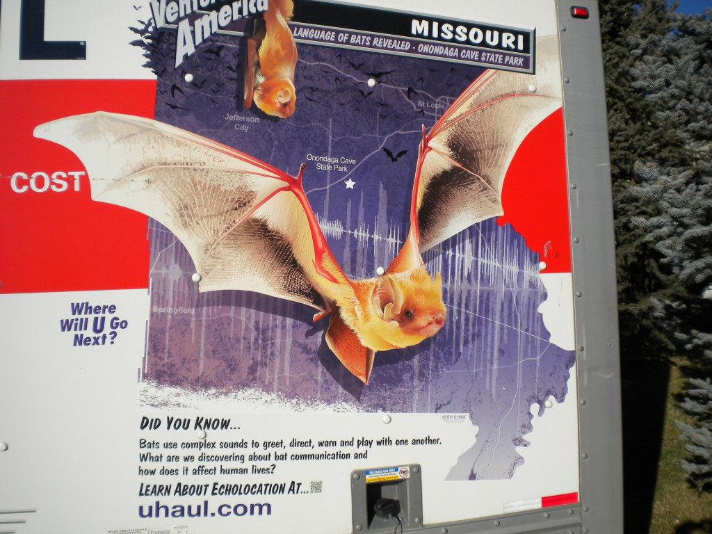Bats in Missouri