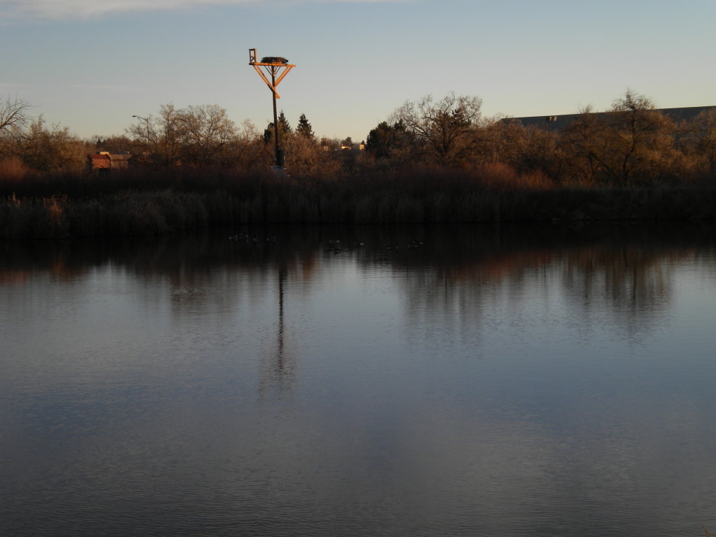 Osprey nest over Cattail Pond